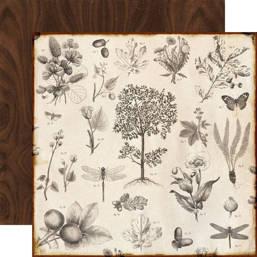 Reflection Botanical
